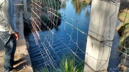 Llegada de agua al terreno donde están los patos y caballos (Jeffrey Curtis)