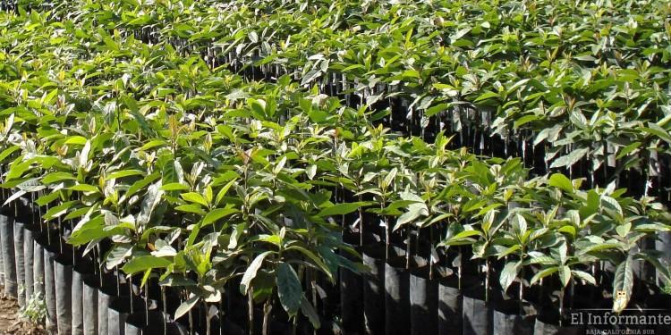 planta arbol reforestacion